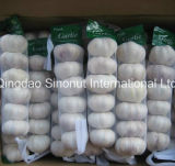 ヨルダンの市場の熱い販売の正常で白く新しいニンニク