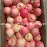 20kg 판지 새로운 신선한 빨간 축제 Apple