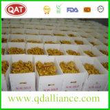Gengibre amarelo chinês fresco com bom preço