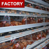 Cages bon marché neuves de couche de poulet de modèle d'approvisionnement d'usine