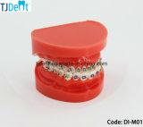 أسنانيّة لتقويم الأسنان تربويّ مظاهرة أسن نموذج ([دي-م01])