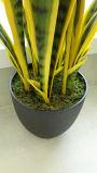 Migliori piante e fiori artificiali di vendita di Sanseveria 1091-27-9b