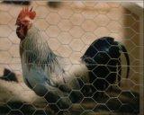 安い金網の/Rabbitの金網の/Galvanizedの六角形の金網
