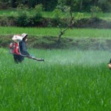 Bioschädlingsbekämpfungsmittel-Herbizid42% 20% SL 27.6% SL Paraquat