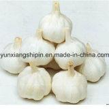 Китайский нормальный белый чеснок, чисто белое цена чеснока