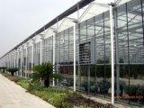 Strato del PC/serra del policarbonato per Growing di fiore