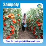 Estufa agricultural do tomate para a venda