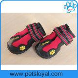 Sapatas resistentes do cão da água com Velcro reflexivo e a sola antiderrapante áspera