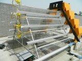 Cage automatique de couche de poulet de ferme avicole de l'Ouganda