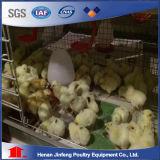 H de Automatische Kooi Chikcen van het Type voor de Apparatuur van de Landbouw van het Gevogelte van de Jonge kip voor Verkoop