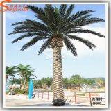 Della decorazione esterna delle 5 palma artificiale palme del tester