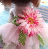 Alineada encantadora del animal doméstico de la ropa del animal doméstico con la flor