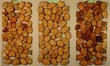 스리랑카 콩 색깔 분류 기계
