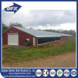 Высокое качество сразу от птицефермы сарая цыпленка стальной структуры фабрики