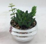Decoração Succulent artificial da grama do mini tamanho