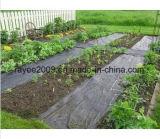 Paisagens de longo prazo Agricultura Tela verde de ervas daninhas