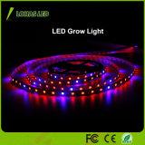 12V 60 LED/des Messinstrument-5m/Roll LED Streifen-hellrote und blaue Farbe LED wachsen hellen Streifen