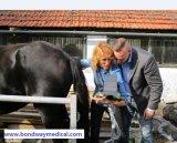 Exploração ferida cavalo do ultra-som
