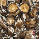 Champiñones secados (superficie brillante japonesa)