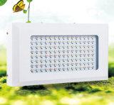 el Ce de tres años 600W aprobado RoHS LED de la garantía crece la luz