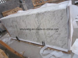 Bianco Antico/laje branca granito do Andromeda (YYL)