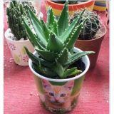 Kundenspezifische Papiercup-Papier-Wasserpflanze-Papier-Wanne