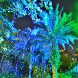 Het openlucht Licht van de Laser voor Bomen, Blisslights met Ver Controlemechanisme