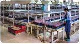 Batterie d'UPS de bloc d'alimentation d'usine de PLA 12V30ah Chine
