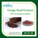 Polvo puro Proanthocyanidin el 95%, extracto del extracto del germen de la uva del extracto de la planta del germen de la uva