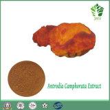Polisacárido do fornecedor 30% do extrato de Antrodia Cinnamomea da qualidade superior; Triterpene de 6%