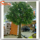Вал завода Ficus изготовления Гуанчжоу дешево искусственний большой