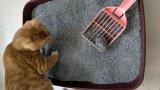 Controle de odor Bentonite Cat Sand Black Color