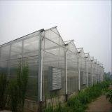 Estufa superior da folha do PC da Multi-Extensão para agricultural
