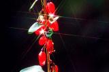 Organische getrocknete rote Goji Beere Ningxia-(Wolfberry) --220 Körner