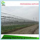 Serres chaudes commerciales agricoles de Multi-Envergure de grande taille de qualité