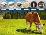 De Staaf van de melk voor 6 Emmer van Claves/het Dierlijke Voeden met MultiSpenen