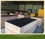 Edificio Usado Construcción de madera contrachapada bajo precio película hizo frente
