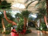 Искусственний декор гостиницы пальмы