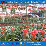 Invernadero profesional del jardín de /Galss de la hoja de la PC de la fábrica