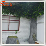 Artificial sempreverde Ficus Tree Made di Fiber Glass