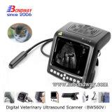 Anesthésie vétérinaire Instrument Ultrason avec sonde