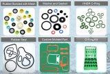 La guarnizione, la guarnizione, l'anello di gomma, la rondella, giunto circolare, ha personalizzato il disegno