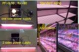 Tubo caldo di colore rosa T8 LED di vendita