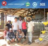 판매/층 감금소/디자인 층 닭 감금소를 위한 상업적인 닭장