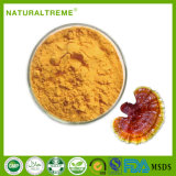 UV Test 20% Polysaccharide Ganoderma Lingzhi Extrait