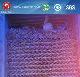 Cage de batterie de poule de ponte d'oeufs (A3L120)