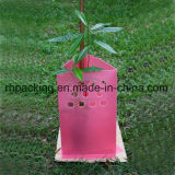 Le panneau ondulé rose de feuille/cannelure de pp/a ridé le panneau de plastique pour protéger le petit arbre