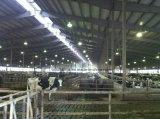 Diseño de los edificios agrícolas de las vacas de la estructura de acero