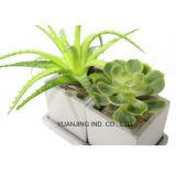 인공적인 정원 훈장 플랜트 알로에 Vera 및 Succulents