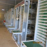 Sistema durável e automático da gaiola da exploração avícola
